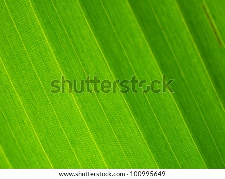 leaf veins - stock photo