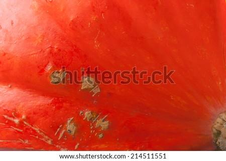 Leaf veins. Pumpkin background. Closeup macro full frame on a ripe orange pumpkin skin - stock photo