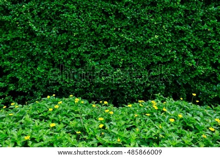 Leaf wall and green flora.