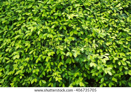 leaf wall texture - stock photo