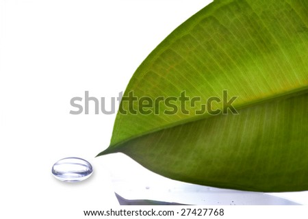 Leaf with dew white background - stock photo