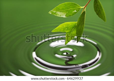 Leaf with drop of rain water causing ripple with green background - stock photo