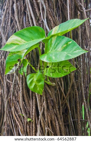 leaf with heart shape on the big tree - stock photo