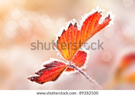 Leaf with ice lace - stock photo