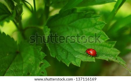 leaf with  Ladybug - stock photo