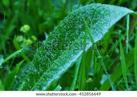 Leaf with Morning Dew and Frost Close-up