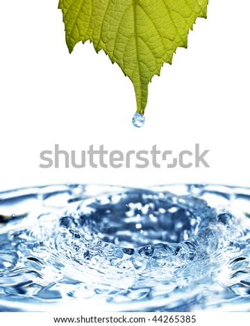 Leaf with water drop - stock photo