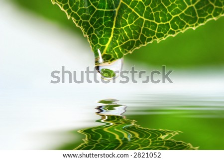 Leaf with water droplet over still water reflection - stock photo