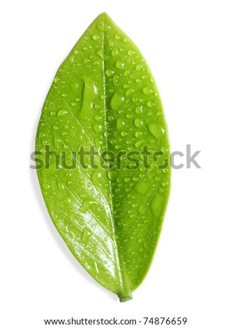 Leaf with water droplets - stock photo