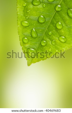 leaf with water drops close up