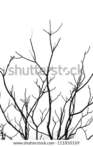 Leafless tree branches abstract background. Black and white. - stock photo