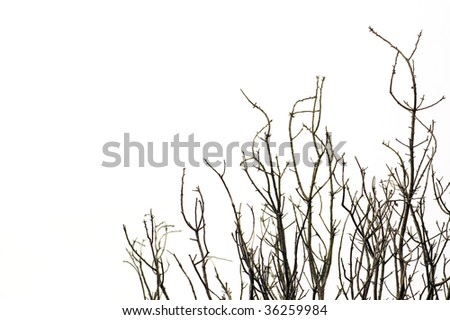Leafless tree branches against a white background.