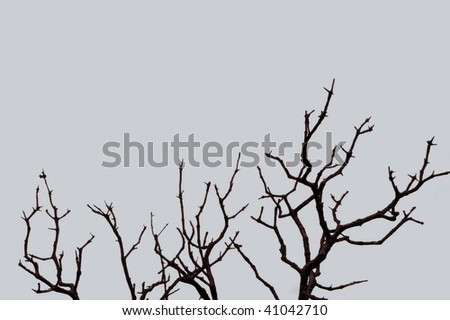 Leafless tree branches silhouette against the winter sky.