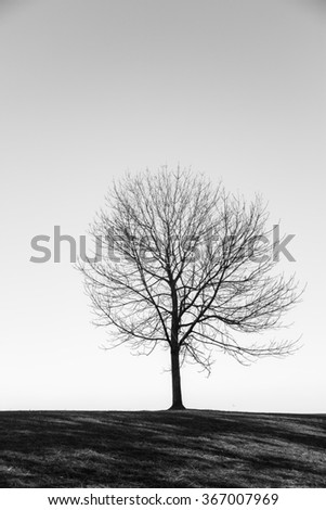 Leafless tree in black and white - stock photo