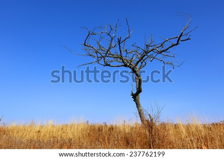 leafless tree on meadow against blue sky background - stock photo