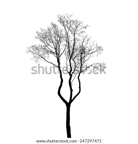 Leafless tree silhouette isolated on white. Stylized photo