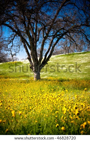 Leafless tree sitting in middle of field where yellow and white wild flowers grow - stock photo