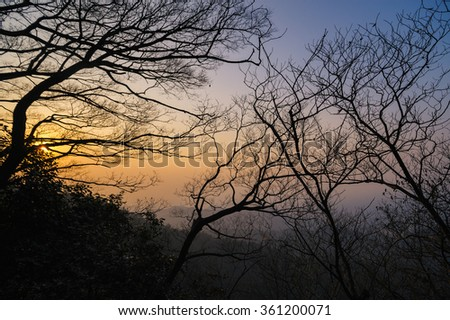 Leafless trees in winter at sunset