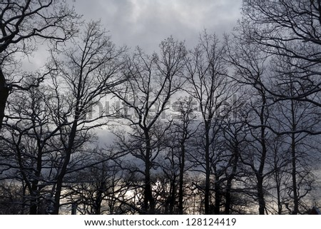 Leafless trees silhouetted against a cloudy sky and some snow covered branches.