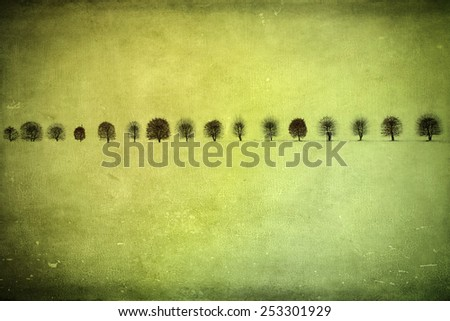 Leafless trees standing in a row on a snow field, textured - stock photo