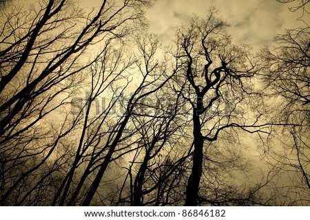 Leafless trees with creepy branches, spooky winter forest - stock photo