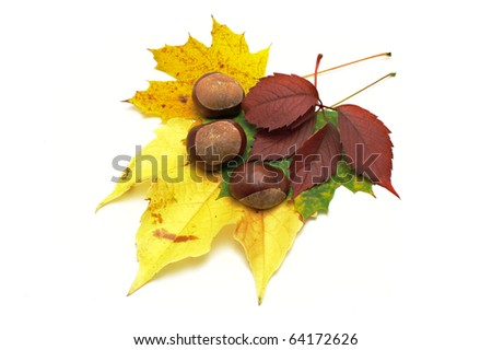 Leafs and conkers on white backgroun