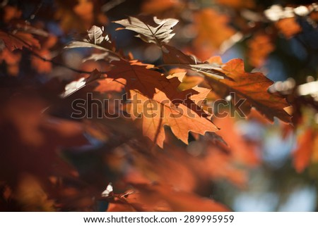 leafs, autumn forest background - stock photo