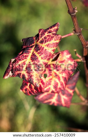 Leafs in the autumn time - stock photo