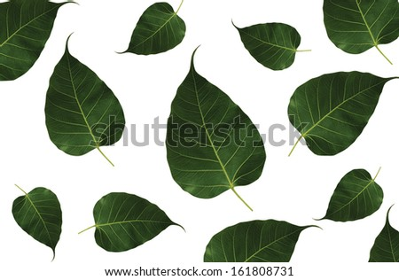 Leafs  on white background - stock photo
