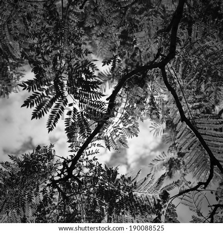 Leafs with the sky and clouds in the background in black and white - stock photo