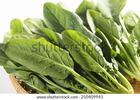 leafy - stock photo