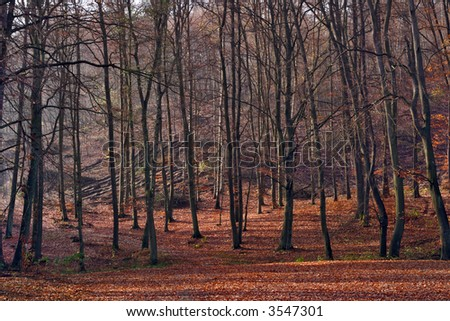 Leafy forest in fall colors. Fallen leaves covering the ground. - stock photo