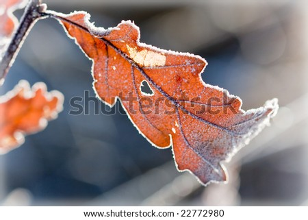 Leafy tree in winter - stock photo