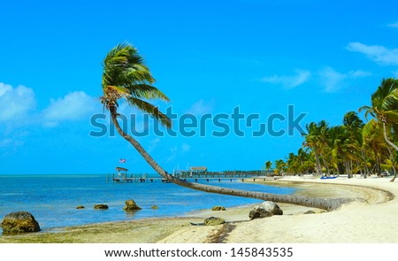 Leaning palm tree on a Caribbean beach - stock photo