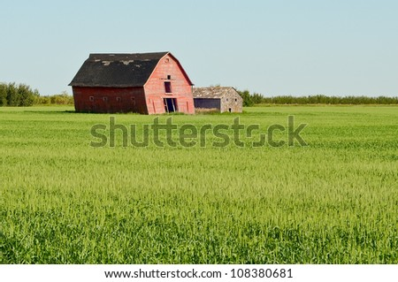 Leaning red barn in green wheat field - stock photo