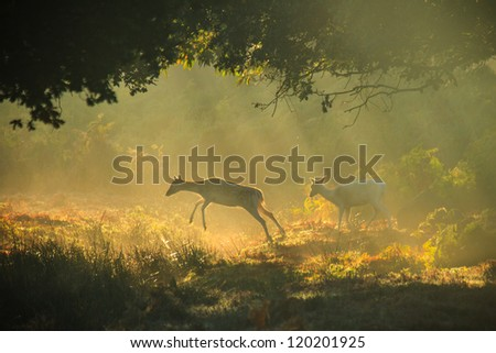 Leaping Fallow hind in woodland - stock photo