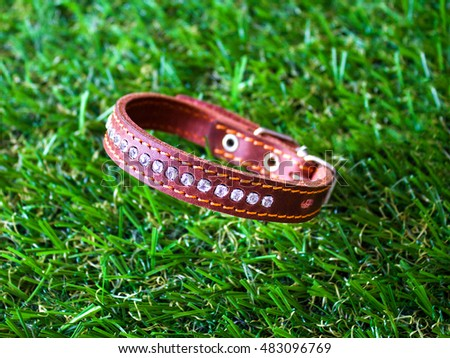 Leather Collar for Dogs,close up on an artificial grass