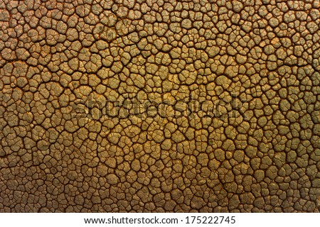leather texture / skin texture