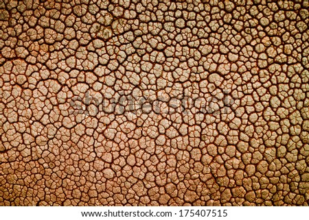leather texture / skin texture - stock photo