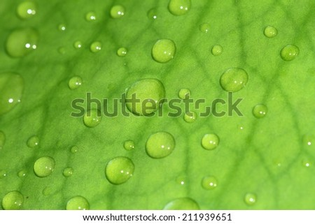 leave and water drops detail - stock photo