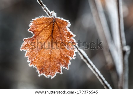 leave from a birch in autumn - stock photo