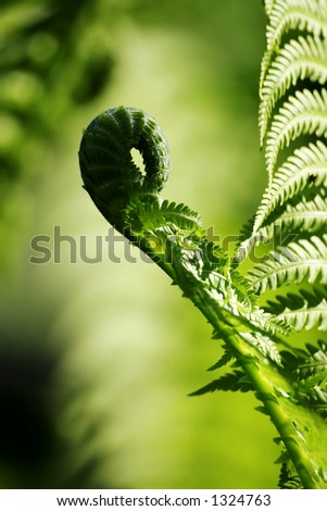 leave of fern