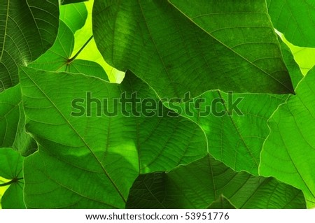Leaves - stock photo