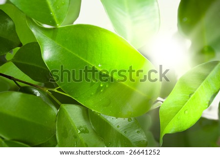 Leaves and dew in morning light