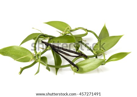 Leaves and dry fruit of vanilla