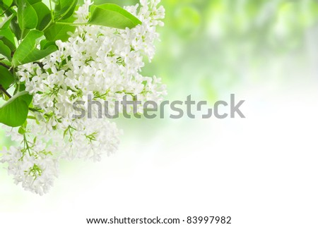 leaves and lilac on the green background - stock photo