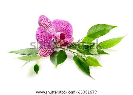 leaves and orchid isolated on white