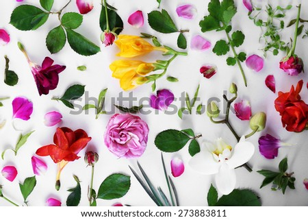Leaves and petals of spring flowers on white background, closeup - stock photo
