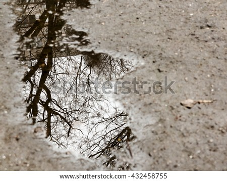 Leaves and rain drops on the pavement or asphalt road. It's raining. - stock photo