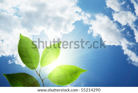 leaves and sunny sky - stock photo